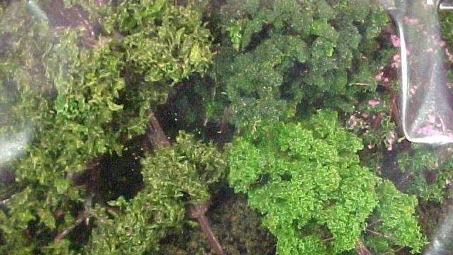 20 Mischwaldbäume sortiert