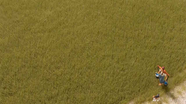 Grasfasern oliv 4,5 mm