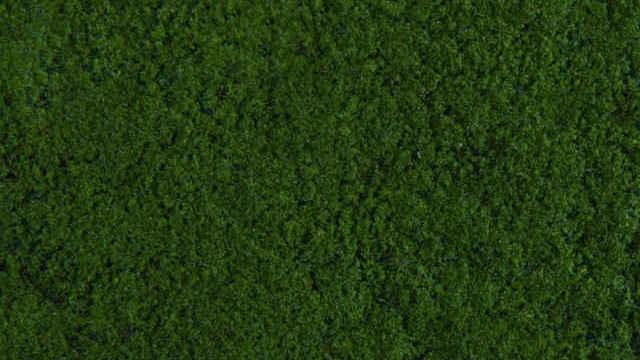 Foliage dunkelgrün