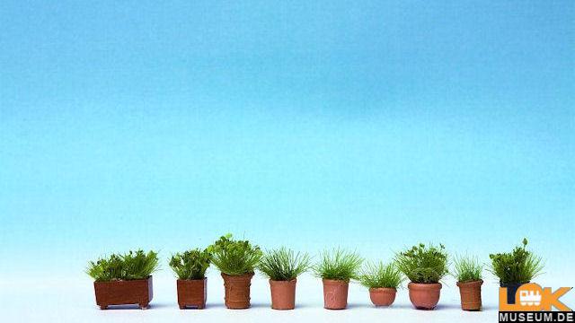 Grünpflanzen in Blumentöpfen