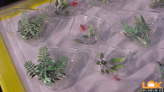 Feld- und Wiesenpflanzen 17 Pflanzen