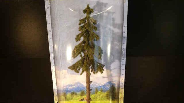 Hochstamm-Wetterfichte 18,5 cm hoch