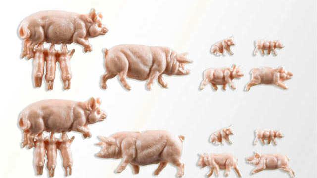 Schweinestall mit Schweinen und Zaun